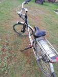rower gazelle