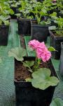 Rozsada sadzonki warzyw i kwiaty
