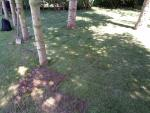 Wycinanie trawników / wycinarka do darni /usuwanie trawników