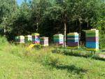 Pszczo�y i miód