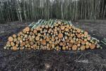 Drewno opa�owe - brzozowe oraz sosnowe